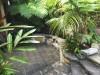 davids-house-garden-walkway